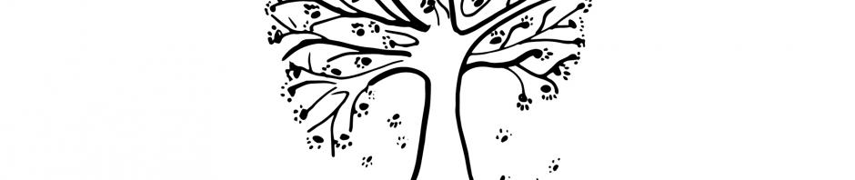 la Forêt de Chinouk